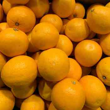 CITRUS sinensis WASHINGTON NAVEL - ARANCIO