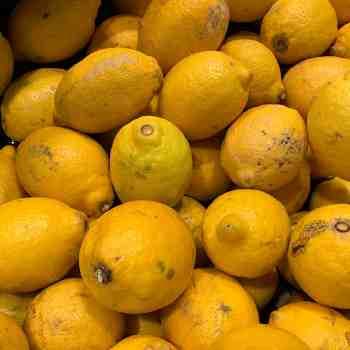 CITRUS limon LIMONE 4 STAGIONI     in vendita